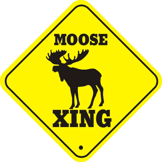 Moose is loose: bad beats of the week (Dec 12 – Dec 18)